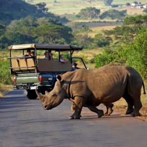 Hluhluwe Game Reserve - Wild life Tour